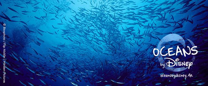 Voyagez au coeur des océans