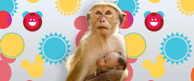 De quel singe s'agit-il ? Testez vos connaissances sur les primates.