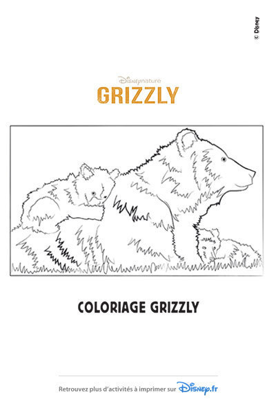 Coloriages grizzly 2014 disney coloriages fr - Dessin de grizzly ...