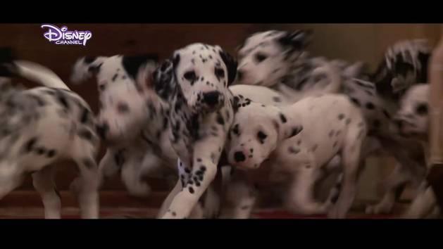 Lieblingsfilm - 101 Dalmatiner - Diesmal sind die Hunde echt