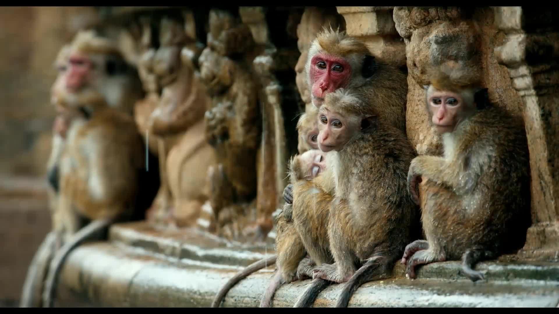 Im Reich der Affen - Trailer