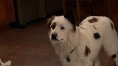 Hund mit Blog