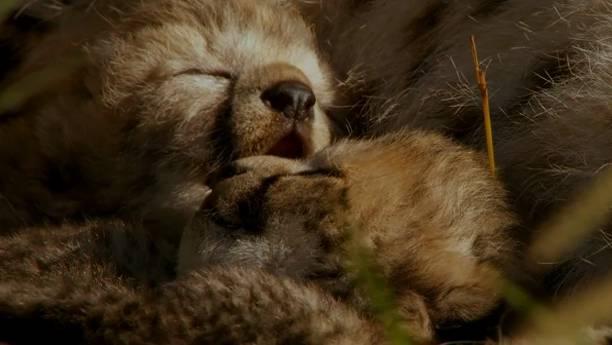 Im Reich der Raubkatzen - Offizieller Trailer