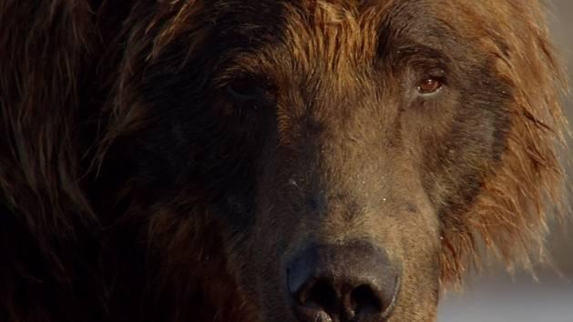 Bären - Offizieller Trailer